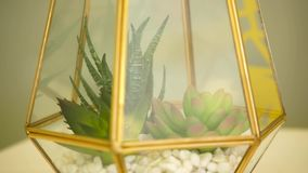 Dekorativ exponeringsglasvas med växter inom stock video