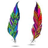 Dekorativ fågelfjäder. Arkivbild