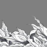 Dekorativ gräns med blommor Spathiphyllums royaltyfri illustrationer