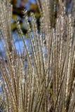 Dekorativ gräscloseup Arkivfoton