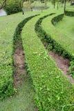 Dekorativ gräsplan parkerar Arkivbilder