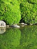 Dekorativ grön lövverk och reflexion i laken Royaltyfria Foton