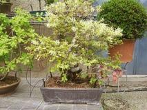 Dekorativ grön natur Royaltyfri Fotografi