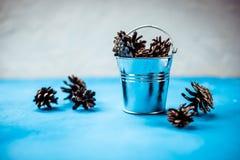 Dekorativ julsammansättning som isoleras på blå bakgrund SÖRJA KOTTAR I EN METALLHINK garnering för den Chrismas säsongen arkivbilder