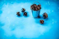 Dekorativ julsammansättning som isoleras på blå bakgrund SÖRJA KOTTAR I EN METALLHINK garnering för den Chrismas säsongen royaltyfri foto
