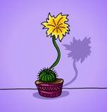 Dekorativ kaktus i en blomkruka Fotografering för Bildbyråer