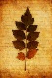 dekorativ leaf Royaltyfri Foto