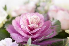 Dekorativ lila kål Ovanlig rolig blomma av Brassicaoleraceaen Bukettblommor av rosor i den glass vasen sjaskig stil Royaltyfria Bilder