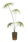 dekorativ liten tree Arkivfoton