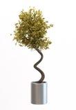 dekorativ liten tree Royaltyfria Foton