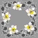 Dekorativ lloral rund ram med utdragna blommapåskliljor för hand arkivfoto