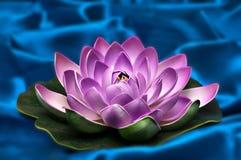 Dekorativ lotusblommabakgrund Arkivfoto