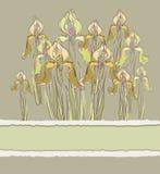 Dekorativ modellinbjudan med irisblommor, Arkivfoton