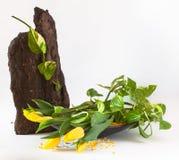 Dekorativ ordning av gula tulpan Royaltyfri Foto