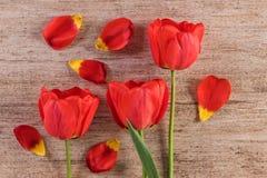 Dekorativ ordning för röda tulpan på ljus - brun bakgrund Slut upp, bästa sikt Royaltyfri Fotografi