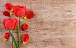 Dekorativ ordning för röda tulpan på ljus - brunt högert bakgrundstextutrymme Royaltyfri Foto