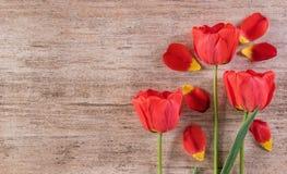 Dekorativ ordning för röda tulpan på ljus - brunt lämnat bakgrundstextutrymme Royaltyfri Foto