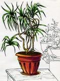 Dekorativ palmträd i röd kruka Fotografering för Bildbyråer
