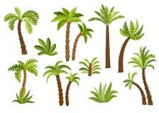 Dekorativ palmträduppsättning Royaltyfria Foton