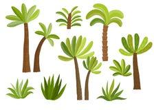 Dekorativ palmträduppsättning Fotografering för Bildbyråer