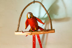 Dekorativ röd papegoja som hänger i en vägg Arkivfoto