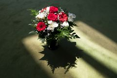 Red and White, Light and Shaddow - a beautiful bunch of flowers in the morning light stock photo