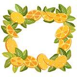 Dekorativ ram av apelsiner Arkivfoto