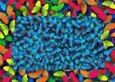 Dekorativ ram av fjärilar Färger av regnbågen Royaltyfri Foto