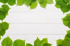 Dekorativ ram av gröna sidor Royaltyfri Fotografi