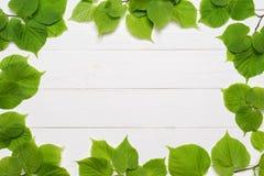 Dekorativ ram av gröna sidor Royaltyfria Bilder