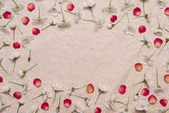 Dekorativ ram av vita körsbärblommor och röda kronblad Arkivbilder