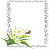 dekorativ ram för fjärilschamomiles Royaltyfri Bild