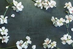 Dekorativ ram från filialer av en blomningmandel Begrepp av Royaltyfria Foton