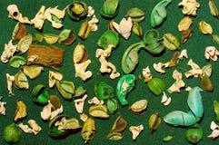 Dekorativ sammansättning av torkade blommor och sidor av växter Arkivbild