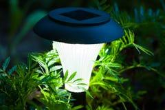 Dekorativ sol- lampbrännskada i blommalövverk i trädgård i mörker T arkivfoton
