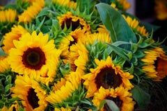 Dekorativ solrosgrupp Royaltyfri Fotografi