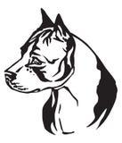Dekorativ stående av amerikanska Staffordshire Terrier 2 för hund vect Stock Illustrationer