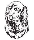Dekorativ stående av illustrationen för vektor för hund för Sussex spaniel royaltyfri illustrationer