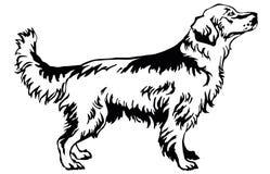 Dekorativ stående stående av hundgolden retriever, vektor dåligt Royaltyfri Bild