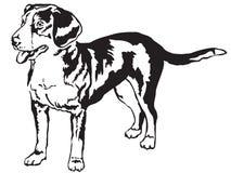 Dekorativ stående stående av vektorn för Entlebucher berghund Royaltyfri Fotografi