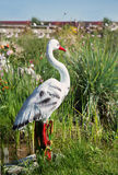 Dekorativ stork i gräset Arkivbilder