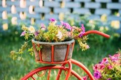 Dekorativ trädgård för blommor för tappningmodellOld Bicycle Equipped korg tonat foto Fotografering för Bildbyråer
