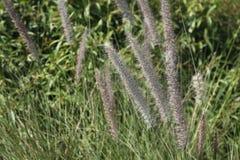 Dekorativ trädgård för springbrunngräs offentligt Arkivbilder