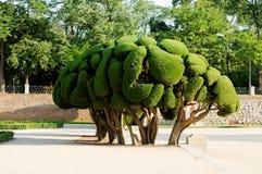 dekorativ tree Arkivfoto