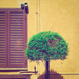 dekorativ tree Arkivbild