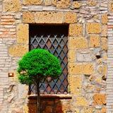 dekorativ tree Arkivfoton