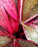 dekorativ växt royaltyfri fotografi