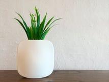 Dekorativ växt i den vita vasen Arkivfoto