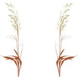 dekorativ växtvektor Arkivfoton