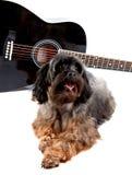 Dekorativ vovve och gitarr. Royaltyfria Bilder